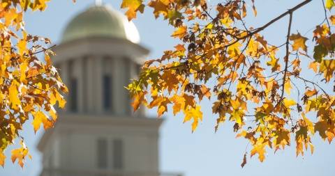 golden autumn leaves in front of old cap